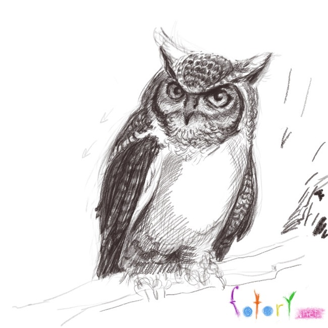 Рисунок совы в графике (19)