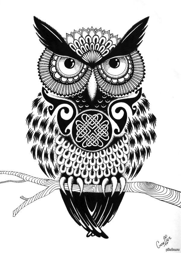 Рисунок совы в графике (8)
