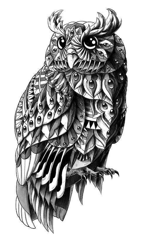 Рисунок совы в графике (9)