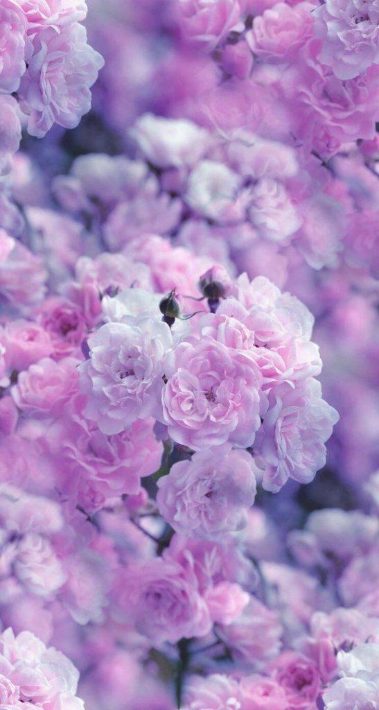 Розовые заставки на айфон (6)