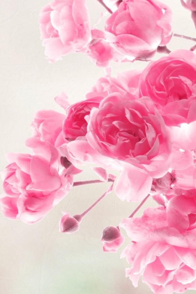 Розовые заставки на айфон (9)