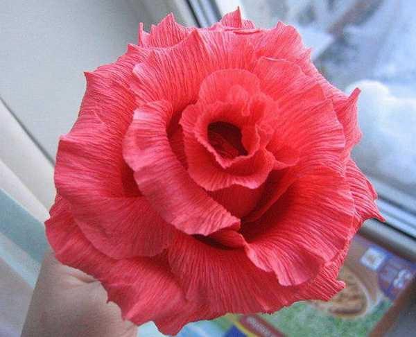 Розы из папиросной бумаги (6)
