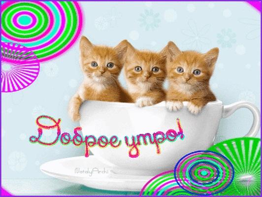 С добрым утром картинки с котятами (1)