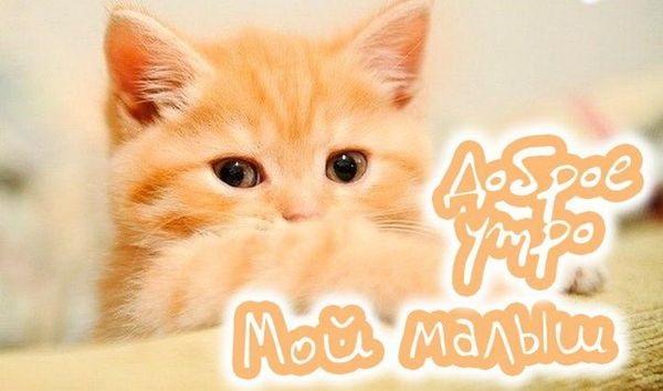 С добрым утром картинки с котятами (12)