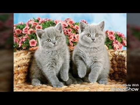 С добрым утром картинки с котятами (13)