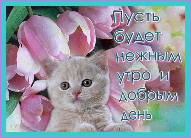 С добрым утром картинки с котятами (15)