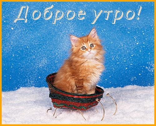 С добрым утром картинки с котятами (16)