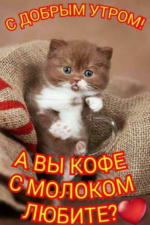 С добрым утром картинки с котятами (17)