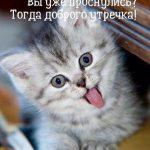 С добрым утром картинки с котятами