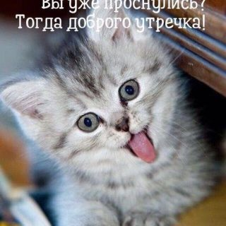 С добрым утром картинки с котятами (2)