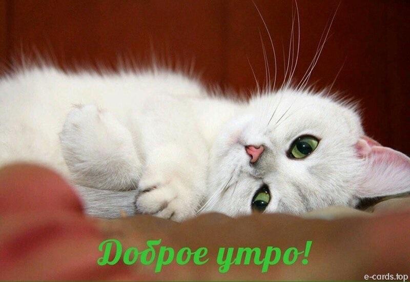 С добрым утром картинки с котятами (20)