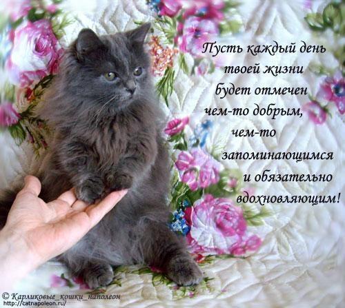 С добрым утром картинки с котятами (3)