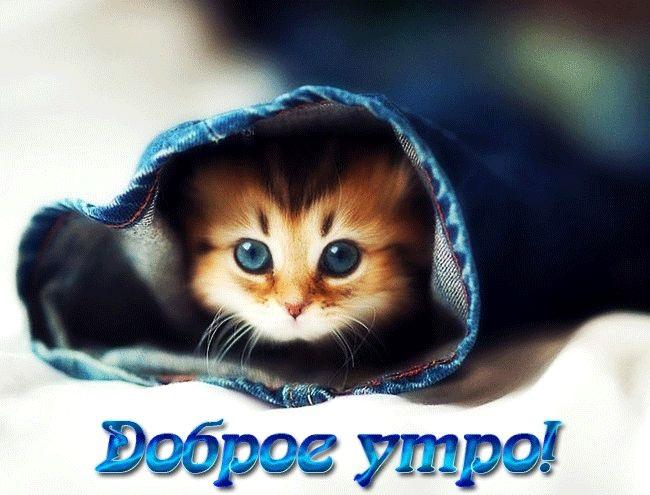 С добрым утром картинки с котятами (4)