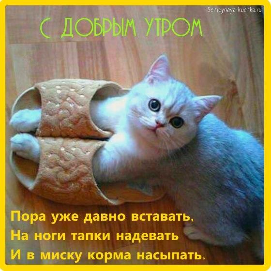 С добрым утром картинки с котятами (5)