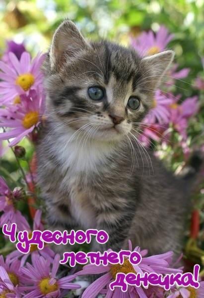 С добрым утром картинки с котятами (7)