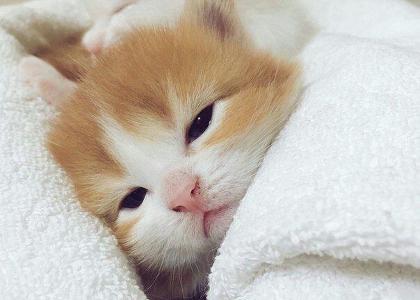 С добрым утром картинки с котятами (9)