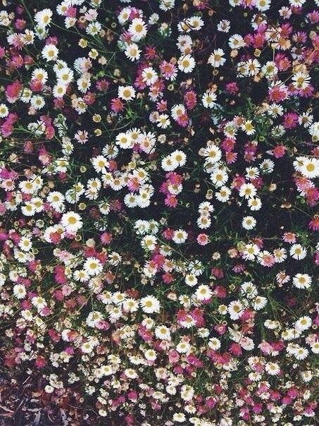 Тумблер фоны цветы - сборка картинок (1)