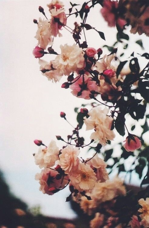 Тумблер фоны цветы - сборка картинок (10)