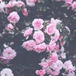 Тумблер фоны цветы — сборка картинок