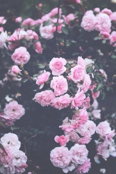 Тумблер фоны цветы   сборка картинок (11)