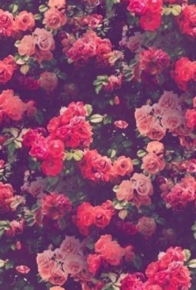 Тумблер фоны цветы - сборка картинок (12)
