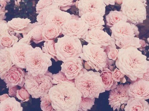 Тумблер фоны цветы - сборка картинок (14)