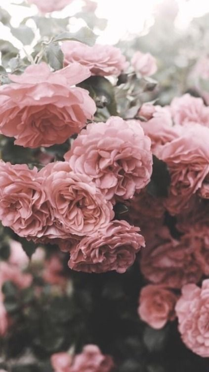 Тумблер фоны цветы - сборка картинок (16)