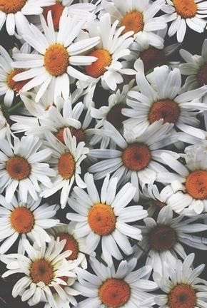 Тумблер фоны цветы - сборка картинок (18)