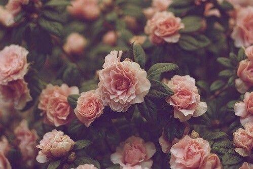 Тумблер фоны цветы - сборка картинок (19)