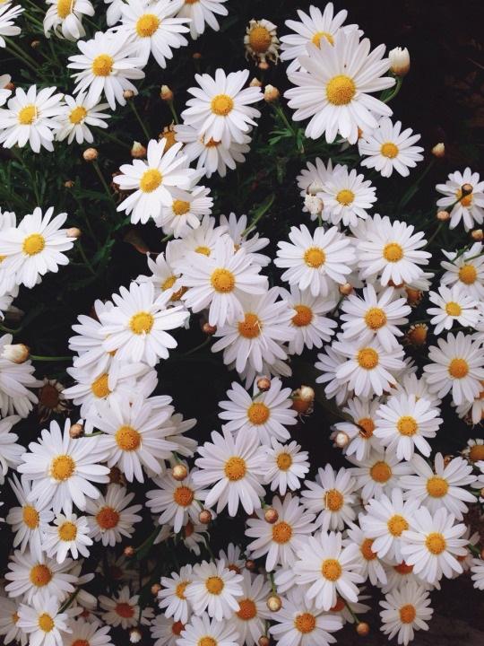 Тумблер фоны цветы - сборка картинок (2)