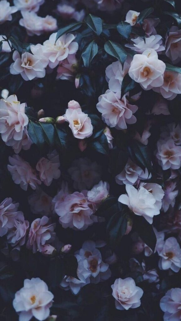 Тумблер фоны цветы - сборка картинок (3)
