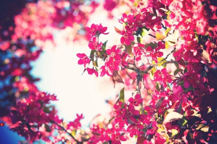 Тумблер фоны цветы - сборка картинок (4)