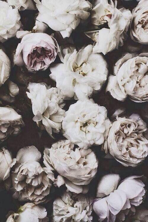 Тумблер фоны цветы - сборка картинок (5)