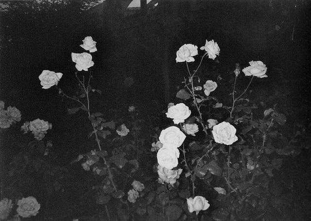 Тумблер фоны цветы - сборка картинок (6)