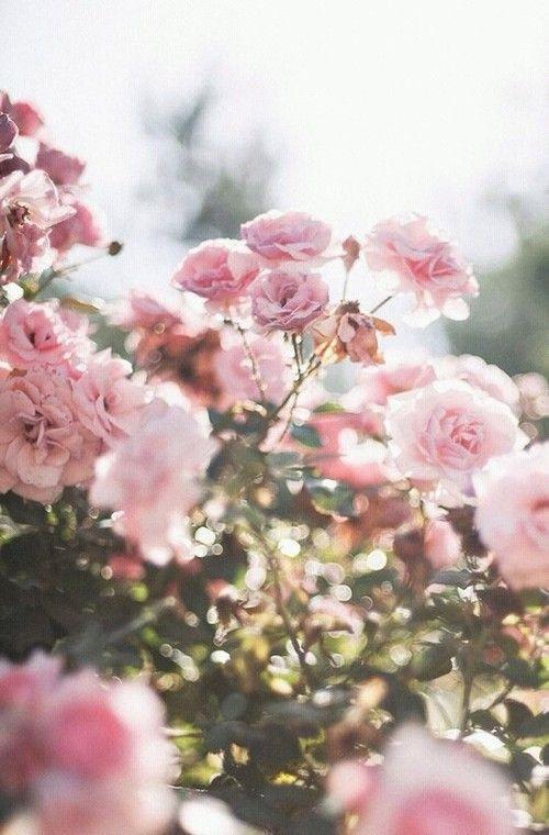 Тумблер фоны цветы - сборка картинок (7)