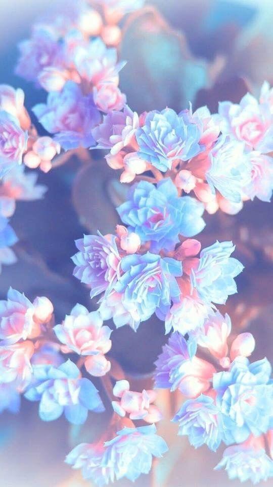 Тумблер фоны цветы - сборка картинок (8)