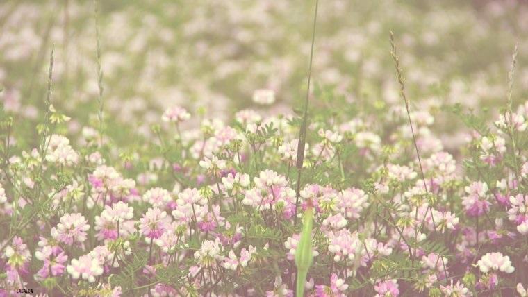 Тумблер фоны цветы - сборка картинок (9)
