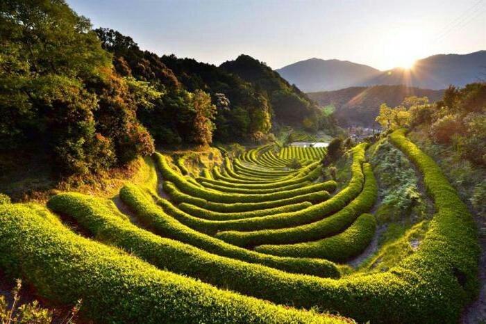 Фотографии природы Япония (1)