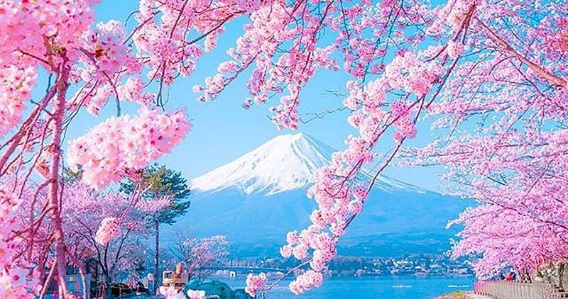 Фотографии природы Япония (13)