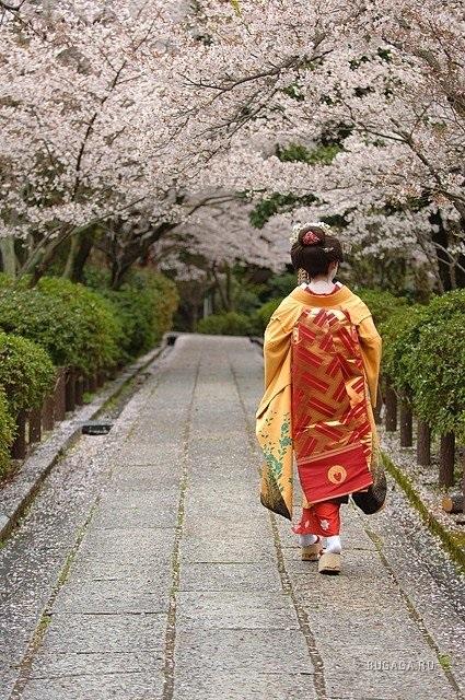 Фотографии природы Япония (14)