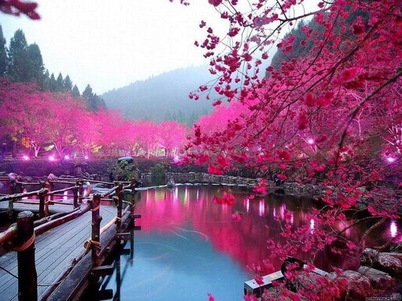 Фотографии природы Япония (15)