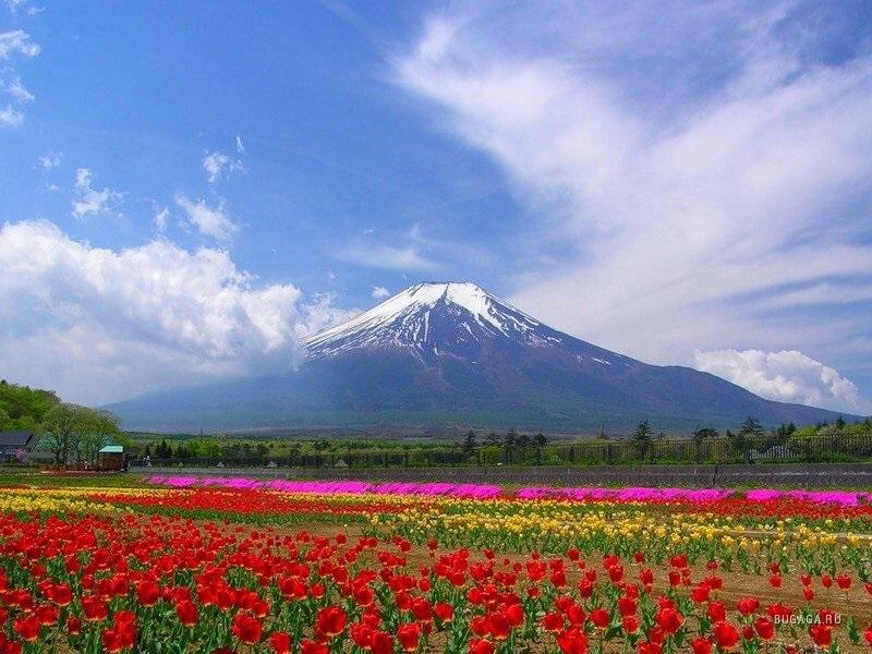 Фотографии природы Япония (16)