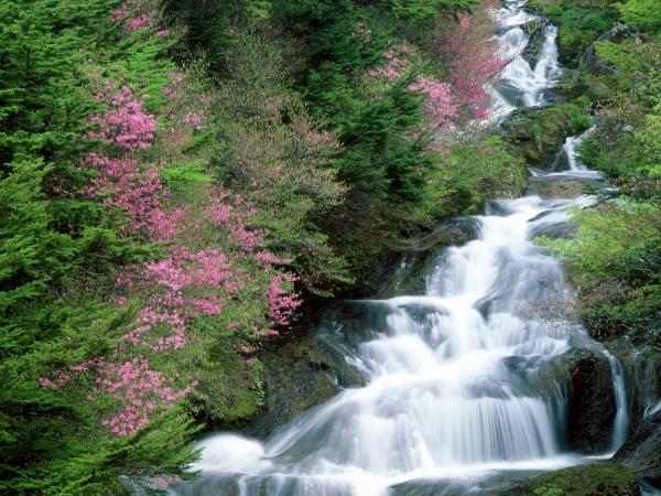 Фотографии природы Япония (17)