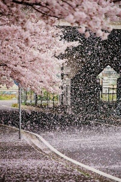 Фотографии природы Япония (19)