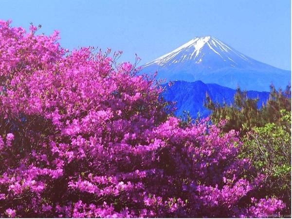 Фотографии природы Япония (20)