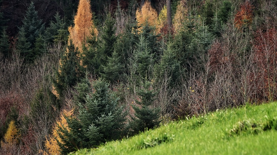 Фотографии природы еловый лес осенью (1)