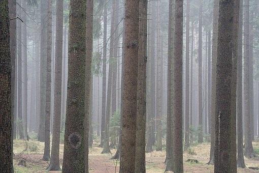 Фотографии природы еловый лес осенью (10)