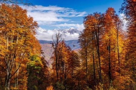 Фотографии природы еловый лес осенью (11)