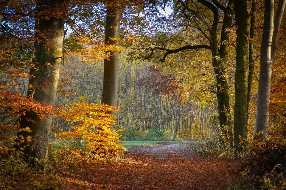 Фотографии природы еловый лес осенью (12)