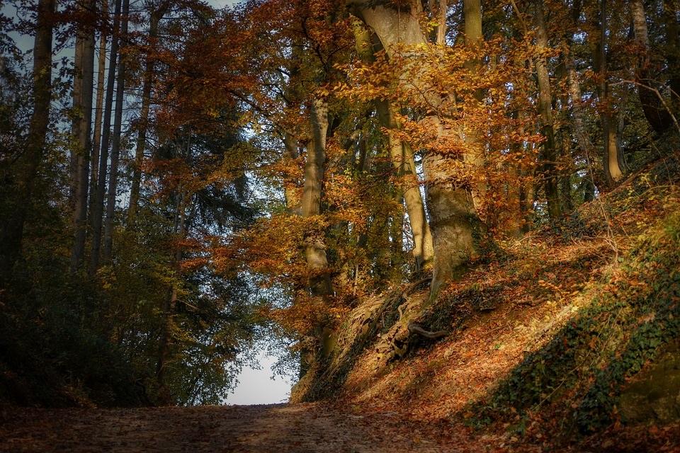 Фотографии природы еловый лес осенью (13)